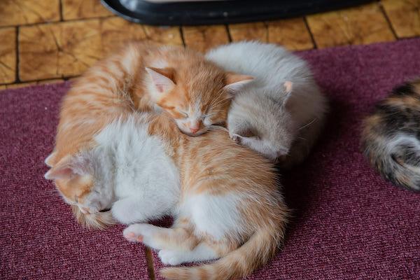 猫専用住居に挑戦。コンセプト賃貸を失敗させないコツ。